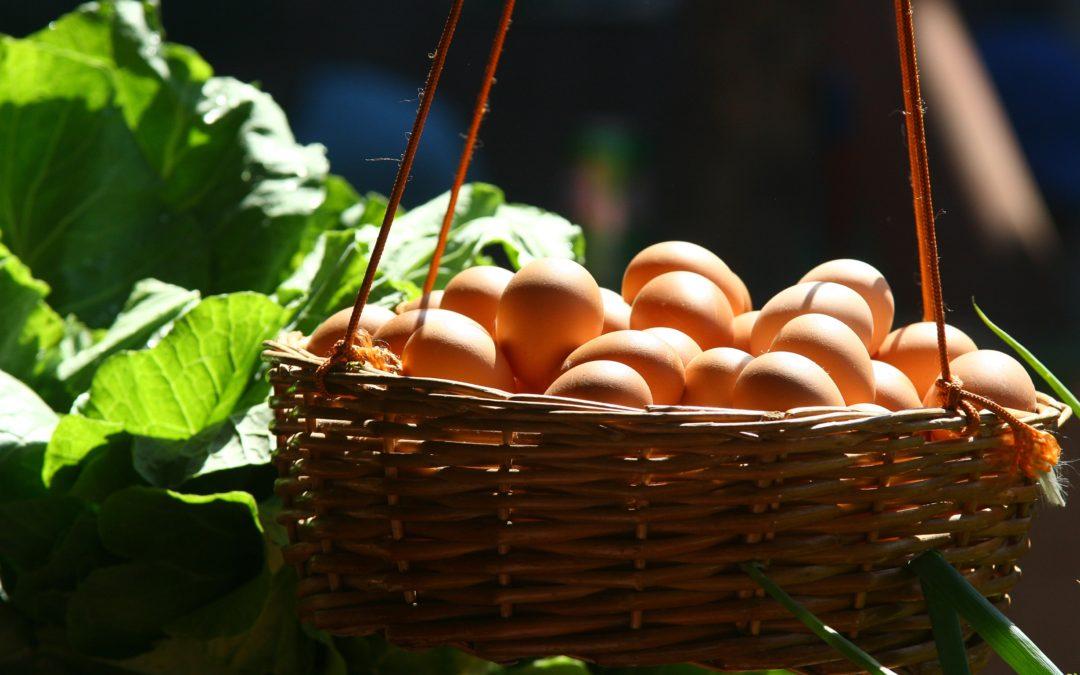 Evolución de la rentabilidad del sector de huevos para consumo